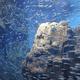 下田海中水族館のイルカショーが見物!ペンギンにも会える|静岡県