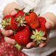 グルメいちご館前田で美味しいいちごを食べよう!|山梨県