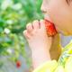 イチゴ狩りなど色々な味覚狩りを楽しめる「原田農園」|群馬県