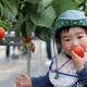 旅名観光農園フルーツ村の味覚狩りや景色の楽しみ方|千葉県