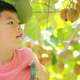 旅名観光農園フルーツ村でいちごからキウイまで味覚堪能|千葉県