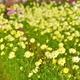 ファーマーズショップかもがわ花の駅で花摘み体験|千葉県
