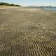ふなばし三番瀬海浜公園で潮干狩りや野鳥観察を楽しもう|千葉県
