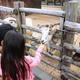 智光山公園 こども動物園で動物とふれあい体験!|埼玉県