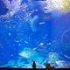 アクアワールド茨城県大洗水族館|イルカショーやサメが人気!