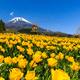 富士山の遊園地ぐりんぱ!アトラクションや料金割引情報も|静岡県