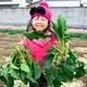 神奈川のイイジマ農園で野菜もいちごも収穫体験!
