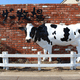 マザー牧場は子連れにおすすめ!動物とふれあいもできる!|千葉県