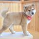 つくばわんわんランドで犬とふれあい体験&愛犬と来園も!|茨城県