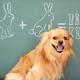 NHK Eテレさんすう犬ワン スギちゃんと柴犬と算数を学ぼう