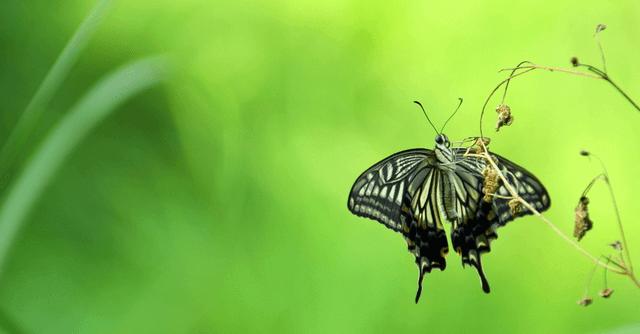 おすすめ 昆虫 図鑑 昆虫図鑑30選!夏の遊びと学びに役立つおすすめ図鑑はこれだ!