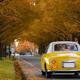 日野オートプラザはミニカー展示が楽しい!車好きに口コミで人気!