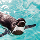 仙台うみの杜水族館は東北初のイルカショーが有名|宮城県