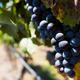 ワインが美味!「サントリー登美の丘ワイナリー」がおすすめ|山梨県