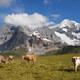 海外子育て事情  スイス式母乳育児は乳製品OK!?