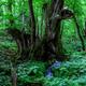 但馬高原植物園はまさに癒しの森!レストランも大人気|兵庫県