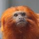 静岡にある浜松市動物園はふれあいや食事の様子も見れる|静岡県