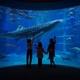 [海遊館]世界の海を子どもと探検!サメやエイにも触れてみよう|大阪府