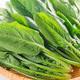離乳食初期のほうれん草|下ごしらえや冷凍保存法、ペーストなどのレシピも