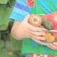 離乳食中期のトマト!おすすめレシピと下ごしらえ、冷凍保存方法は?
