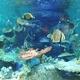 関西の水族館おすすめ17選!触れるイベントやイルカショーも
