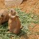 ナイトズーが人気のいしかわ動物園!割引・周辺情報も|石川県