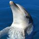 船で行く鳥羽イルカ島!イルカタッチやカモメの餌やりも|三重県