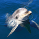 無人島の水族館あわしまマリンパークの割引・周辺情報|静岡県