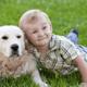 子どもの目が赤く腫れて痒む。犬アレルギー?|専門家の見解