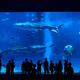 関東の水族館人気のおすすめ4選!イルカやシャチのショーも!