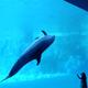親子で楽しめる東海の水族館!展示イベントショーが盛りだくさん