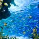 サンシャイン水族館に行こう!割引料金や混雑情報も|東京都