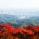 【関東】親子で紅葉狩り!ケーブルカーで行く日帰りハイキング3選