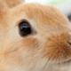 アレルギー持ちの子ども。ウサギを飼うのもダメ?|専門家の見解