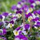 子どもに読ませたい甲斐信枝の絵本11選|草花の美しさが魅力!