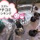 おすすめ動物園の口コミランキング ~生後6-11ヶ月編【2018年12月】