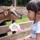 おすすめ動物園の口コミランキング ~2歳編【2019年1月】