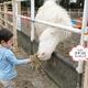 おすすめ動物園の口コミランキング ~3歳編【2019年1月】