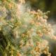 花粉の時期に新生児を外に出すと花粉症になりやすい?|専門家の見解