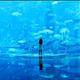 首都圏の水族館!雨のおすすめ【記事特集】