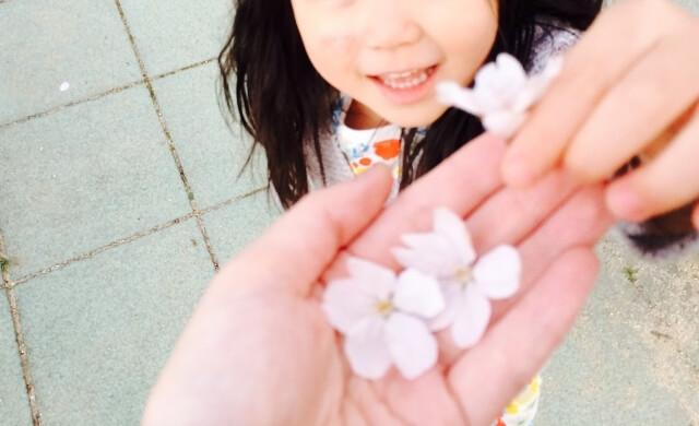 子どもが摘んだ花,花,栽培キット,簡単
