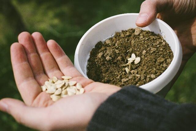 種蒔き,花,栽培キット,簡単