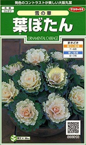 サカタのタネ 葉ぼたん 雪の華 ,花,栽培キット,簡単