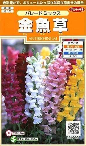 金魚草 パレードミックス,花,栽培キット,簡単