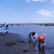 根室春国岱海岸潮干狩場,北海道 潮干狩り,ザクザク,ワンダーランド