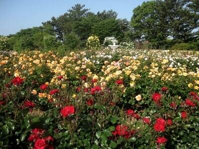 はままつフラワーパーク,静岡県,植物園,フラワーパーク