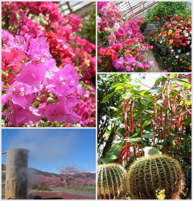 下賀茂熱帯植物園,静岡県,植物園,フラワーパーク