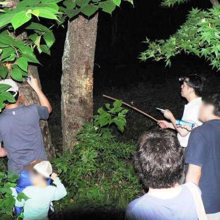 夜の昆虫採集,昆虫採集,埼玉,カブトムシ