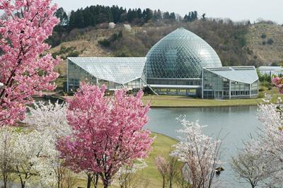 新潟県立植物園,新潟,植物園,おすすめ