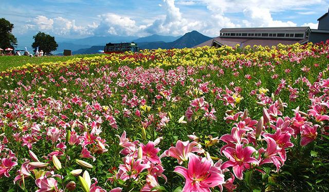高山植物園 アルプの里,新潟,植物園,おすすめ
